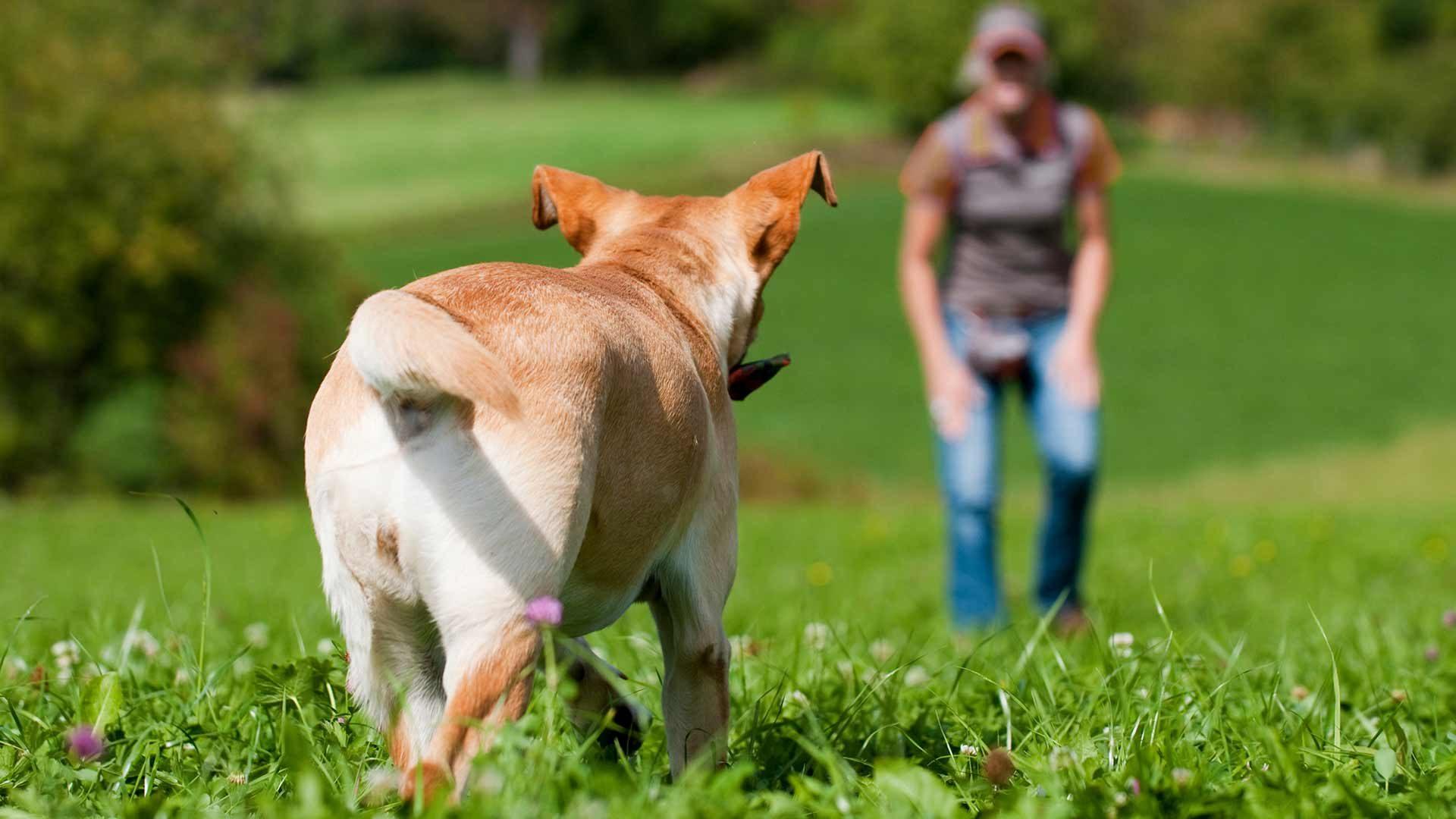 Hundewiese in Lana