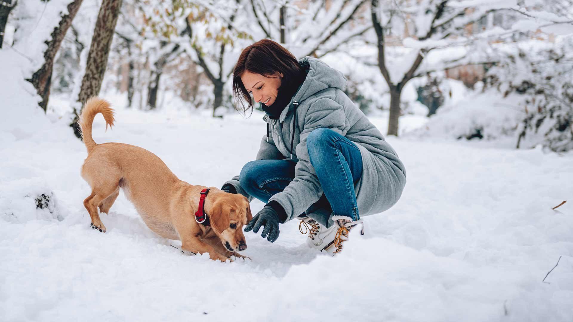 Winterwanderungen mit Hund