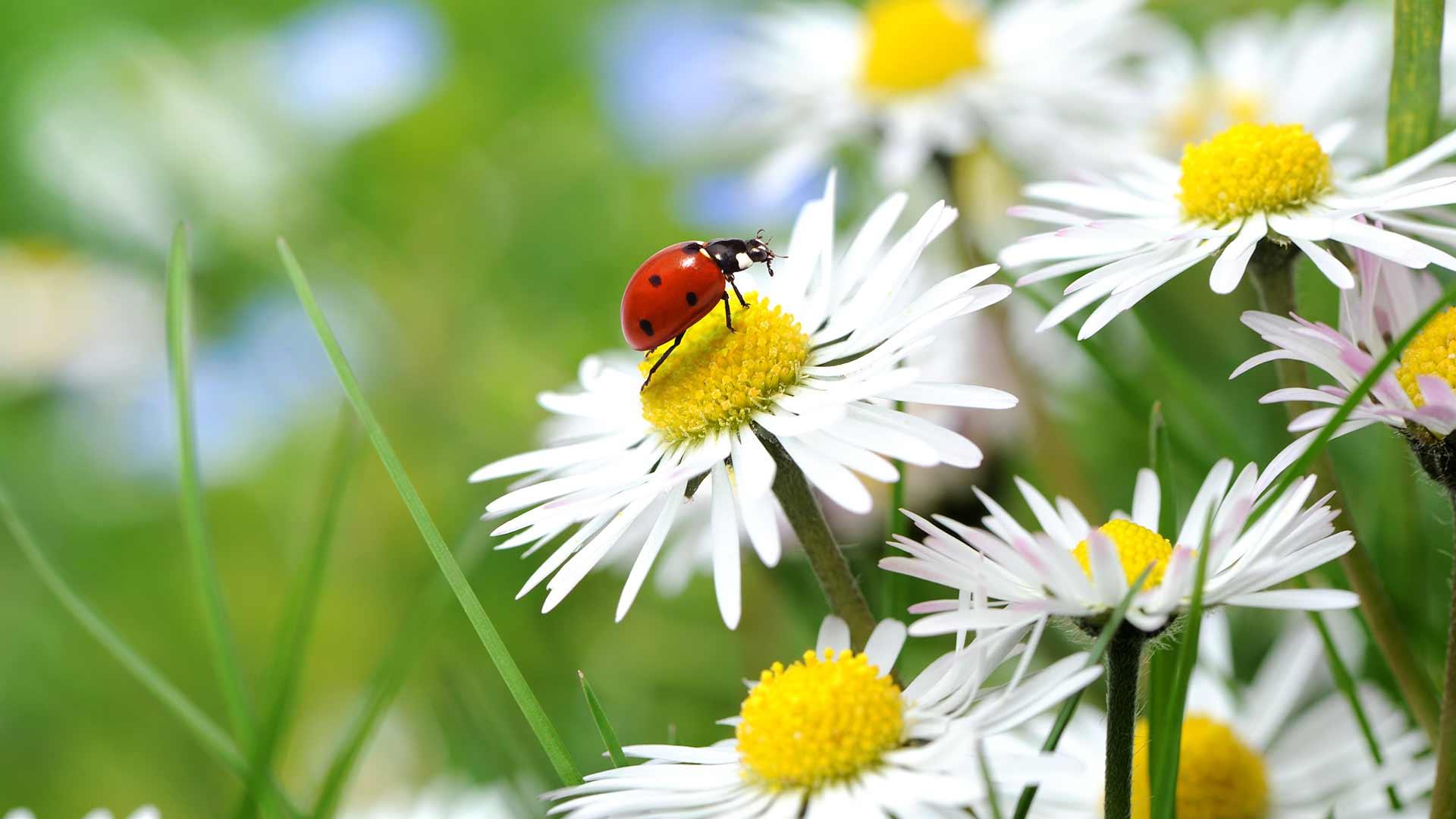 Meran im Frühling
