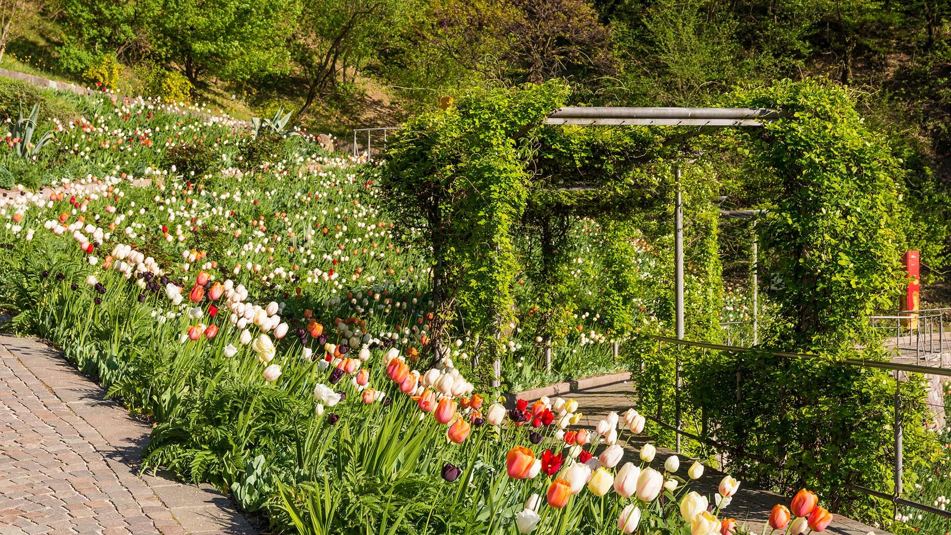 Frühling - Schloss Trauttmansdorff
