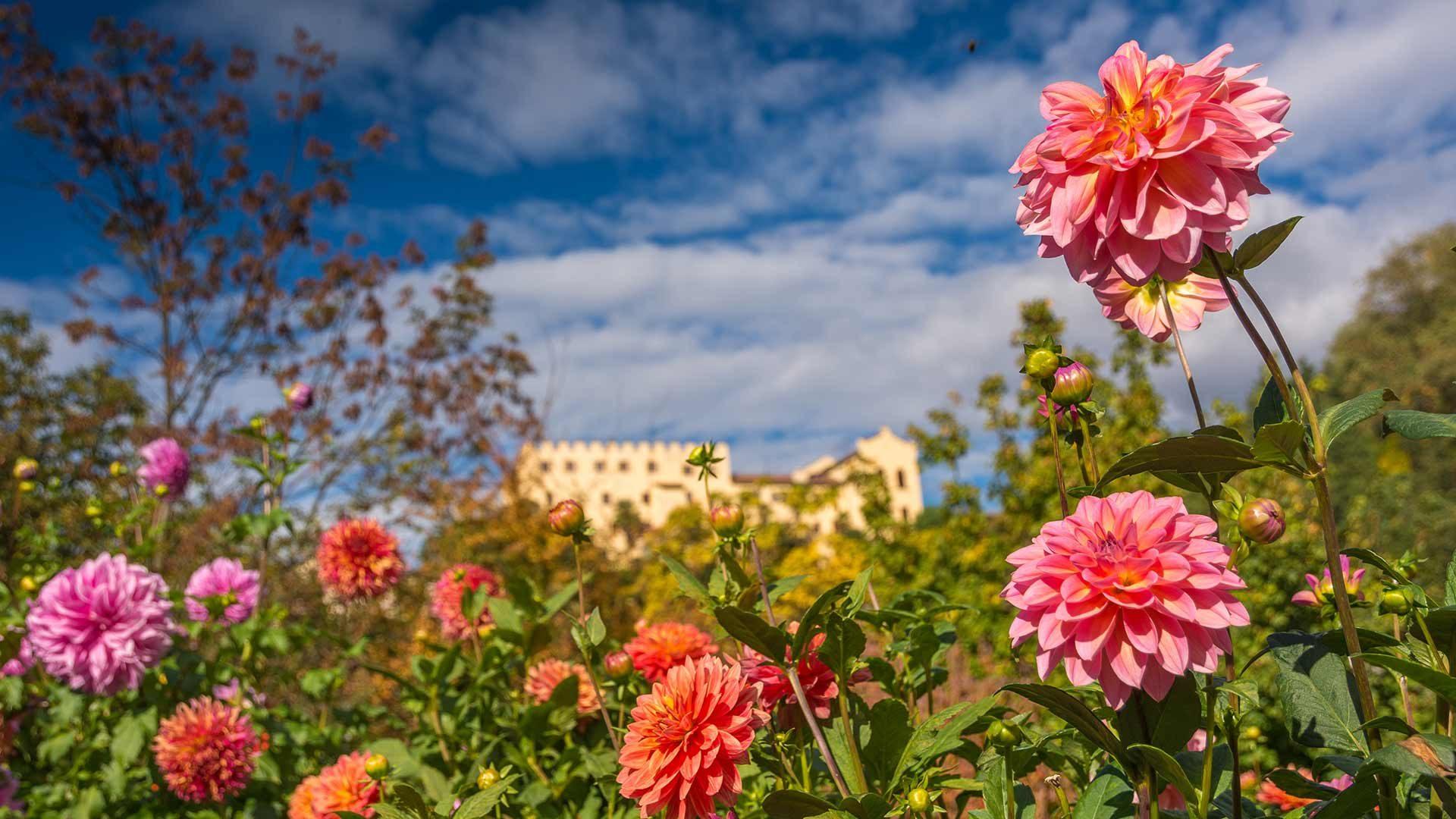 Frühling - Gärten von Schloss Trauttmansdorff
