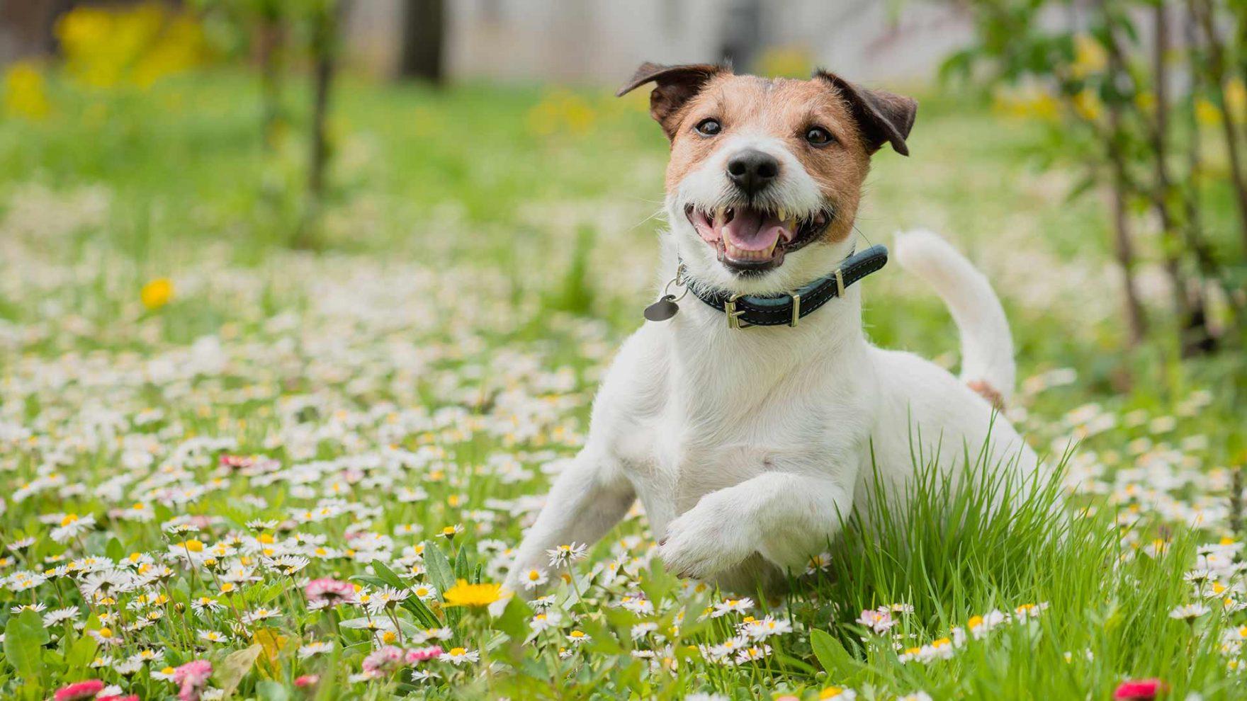 Frühling in Meran und Umgebung - Urlaub mit Hund