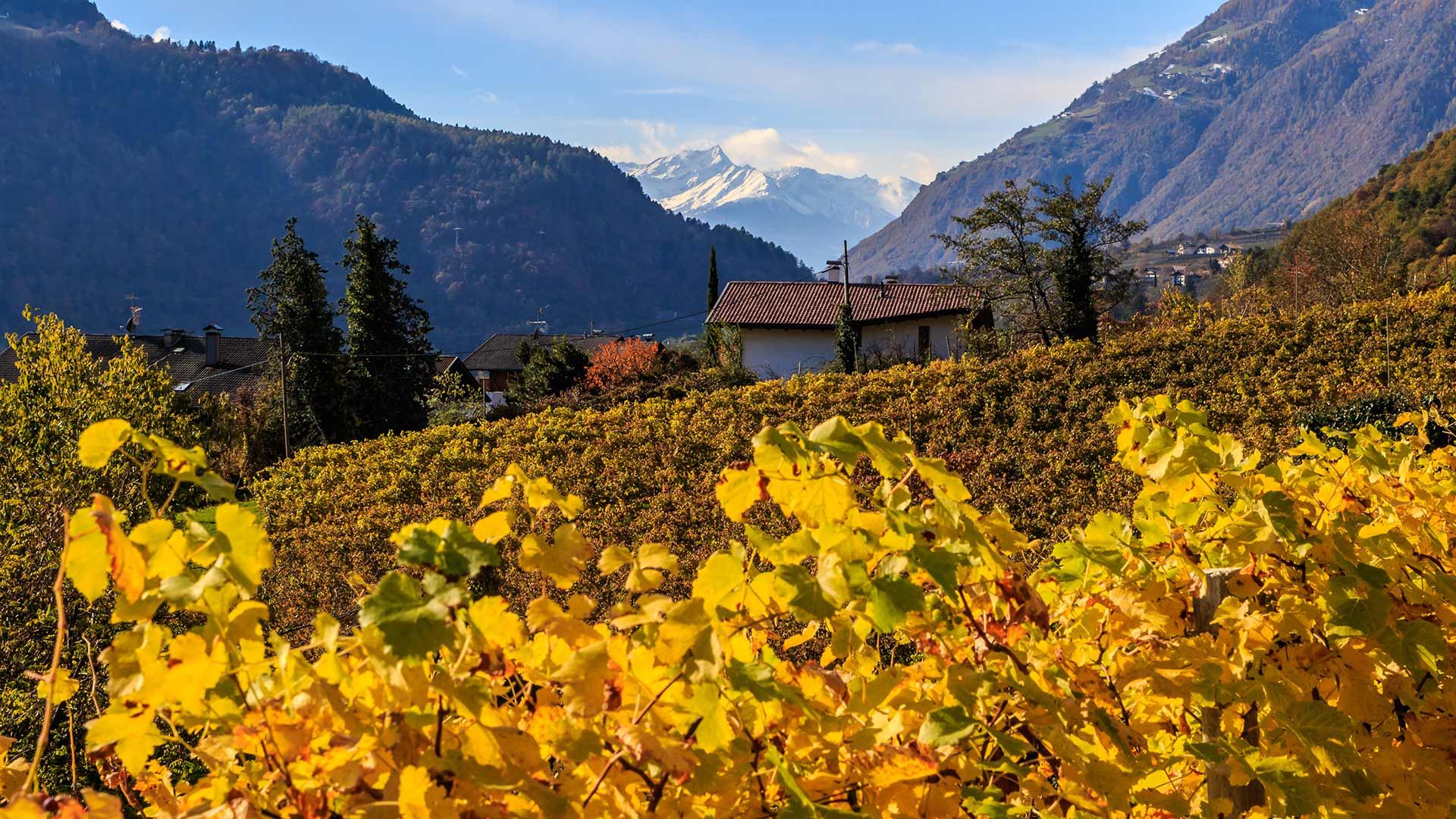 Ultental - Herbst