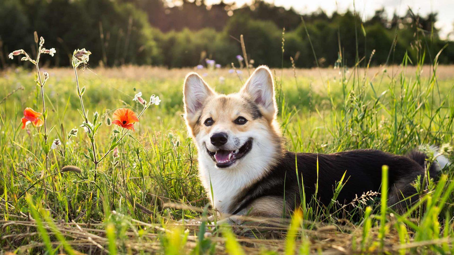 Sommer in Meran und Umgebung - Urlaub mit Hund