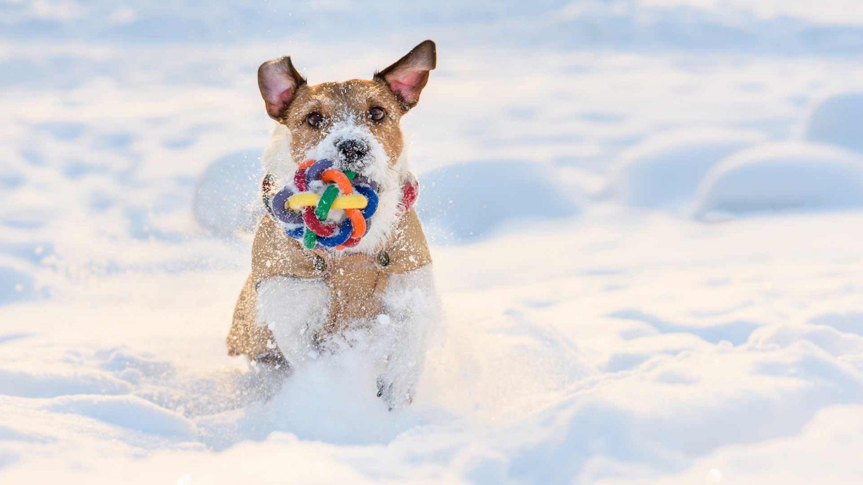 Winter in Meran und Umgebung - Urlaub mit Hund