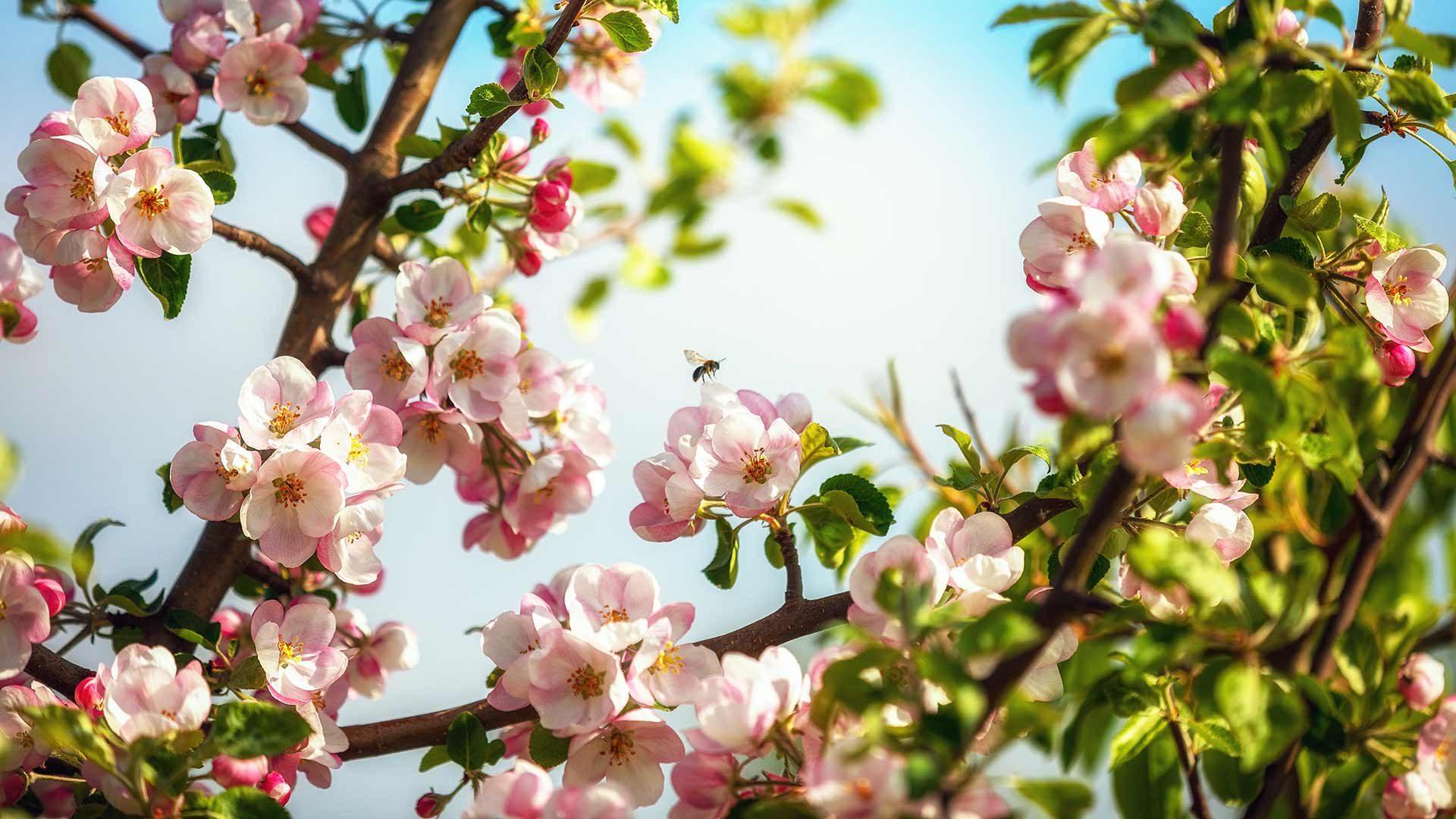 Frühling in Tscherms