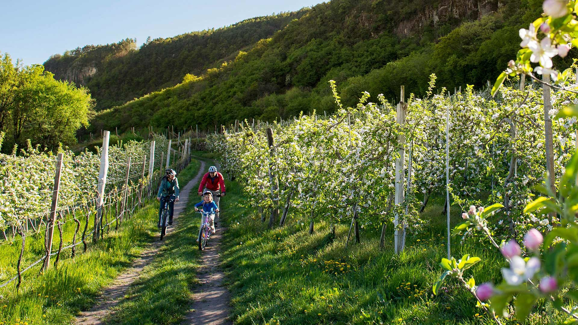 Rundtour durch die Etschtaler Apfelwiesen