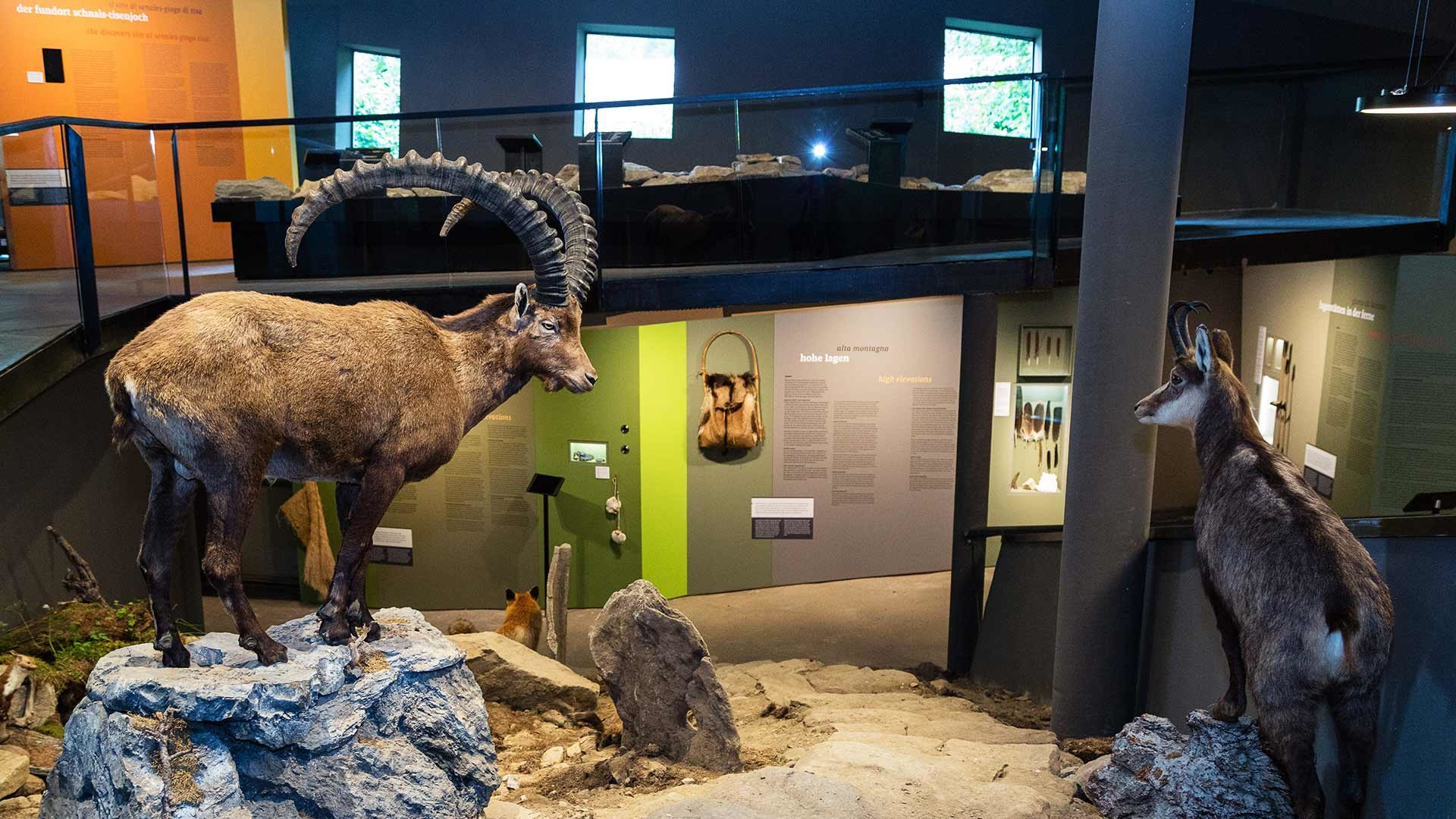 Archeoparc Schnalstal - Ausstellungen