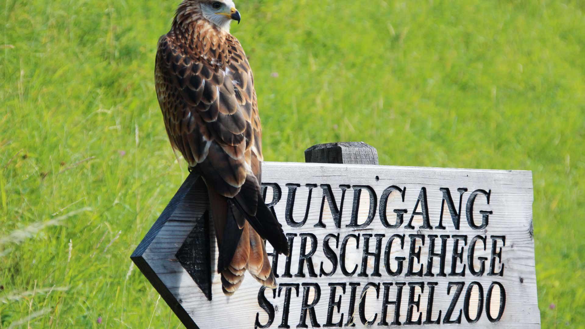 Hirschgehege, Streichelzoo & Flugshow