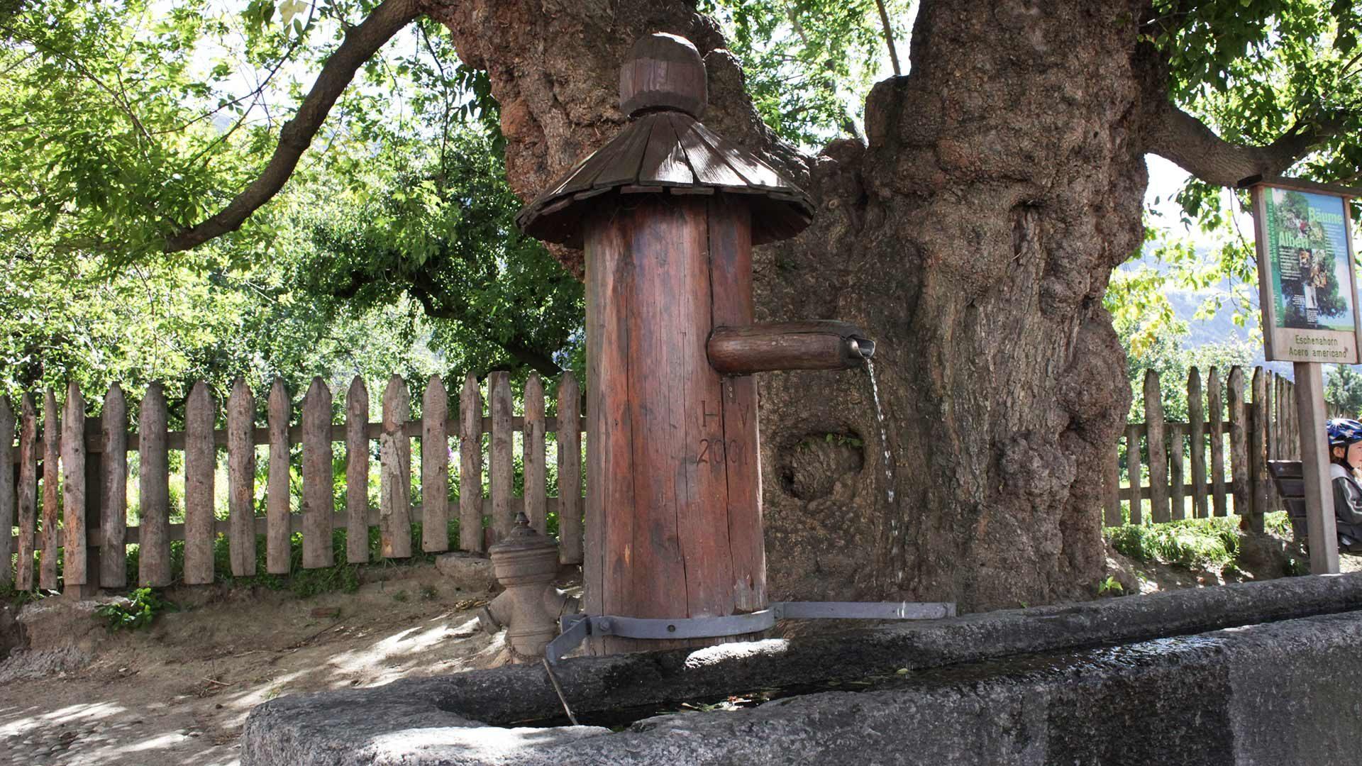 Naturdenkmal Eschenahorn und alter Brunnen