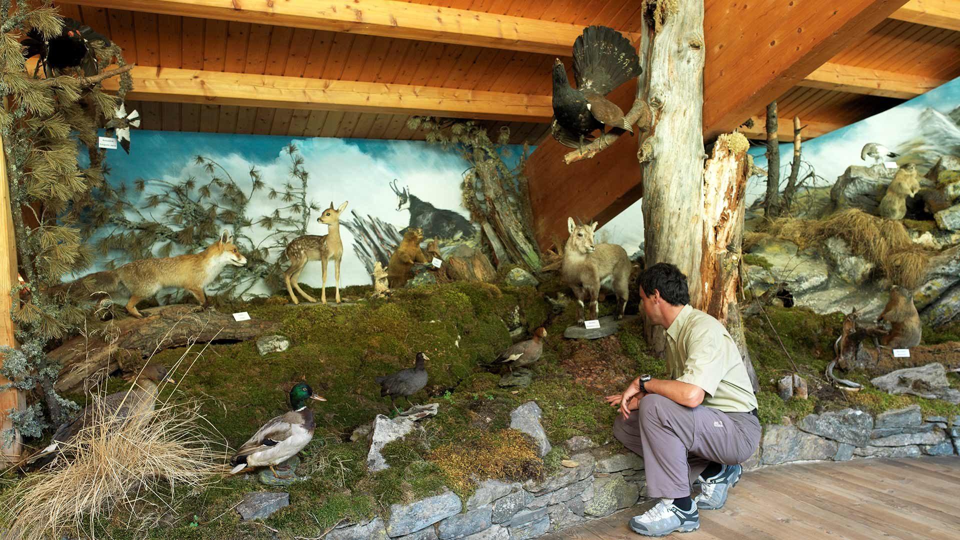 Naturparkhaus Texelgruppe in Naturns
