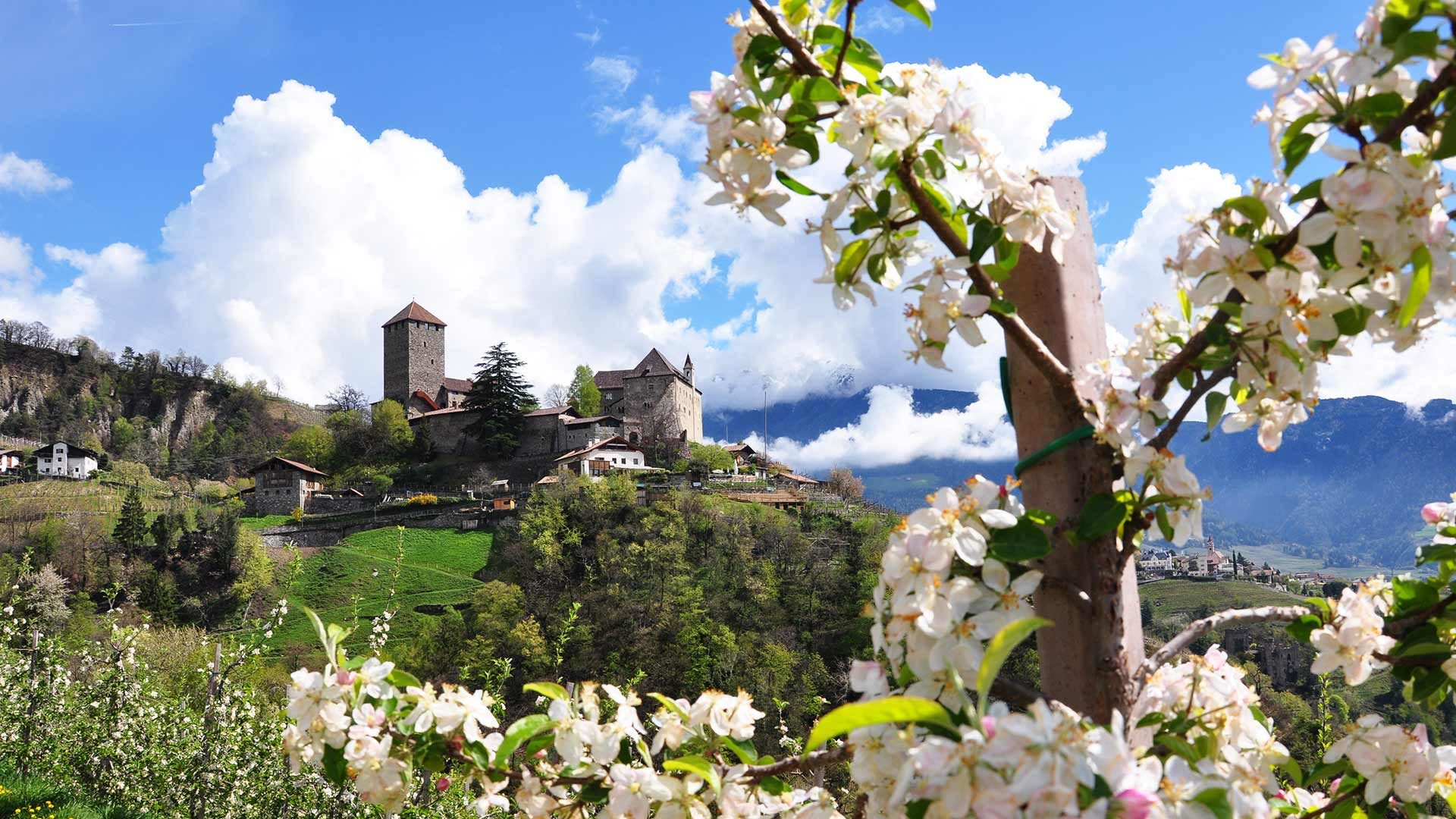 Schloss Tirol mit Apfelblüte