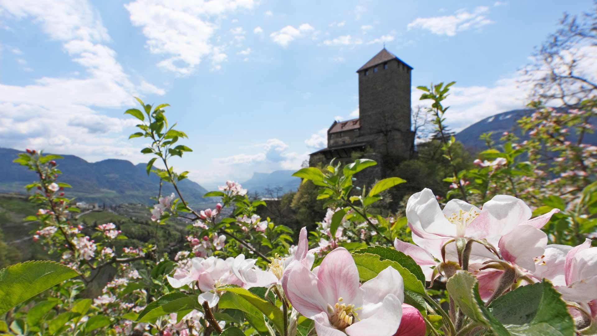 Schloss Tirol - Frühling