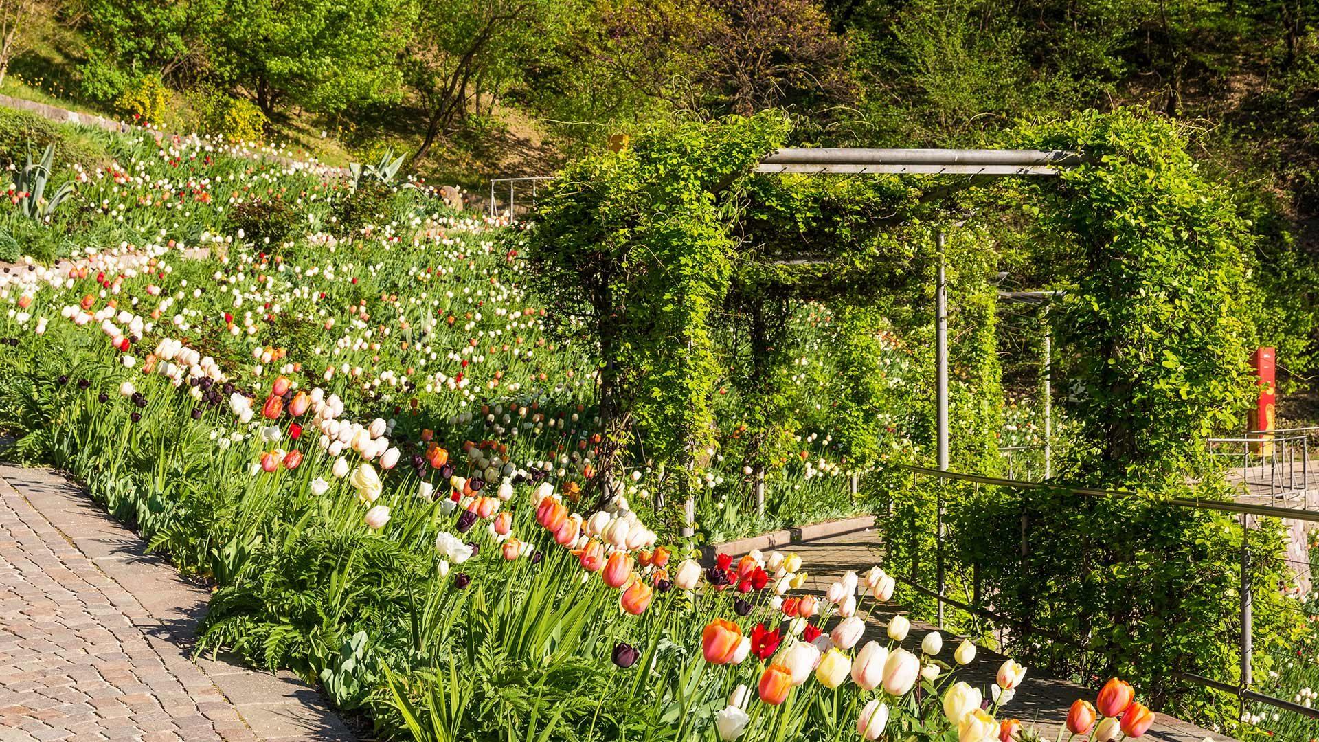 Gärten von Schloss Trauttmansdorff - Frühling