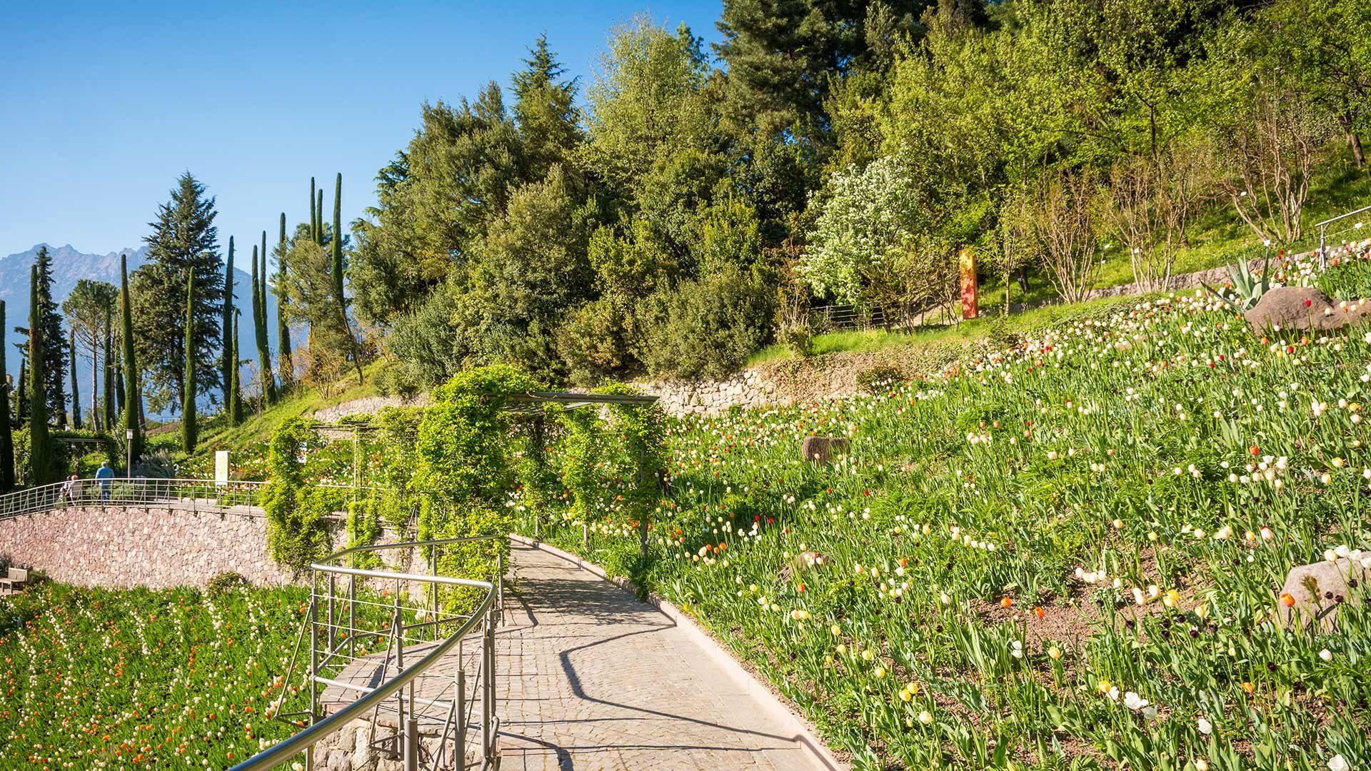 Tulpenwiese - Gärten von Schloss Trauttmansdorff