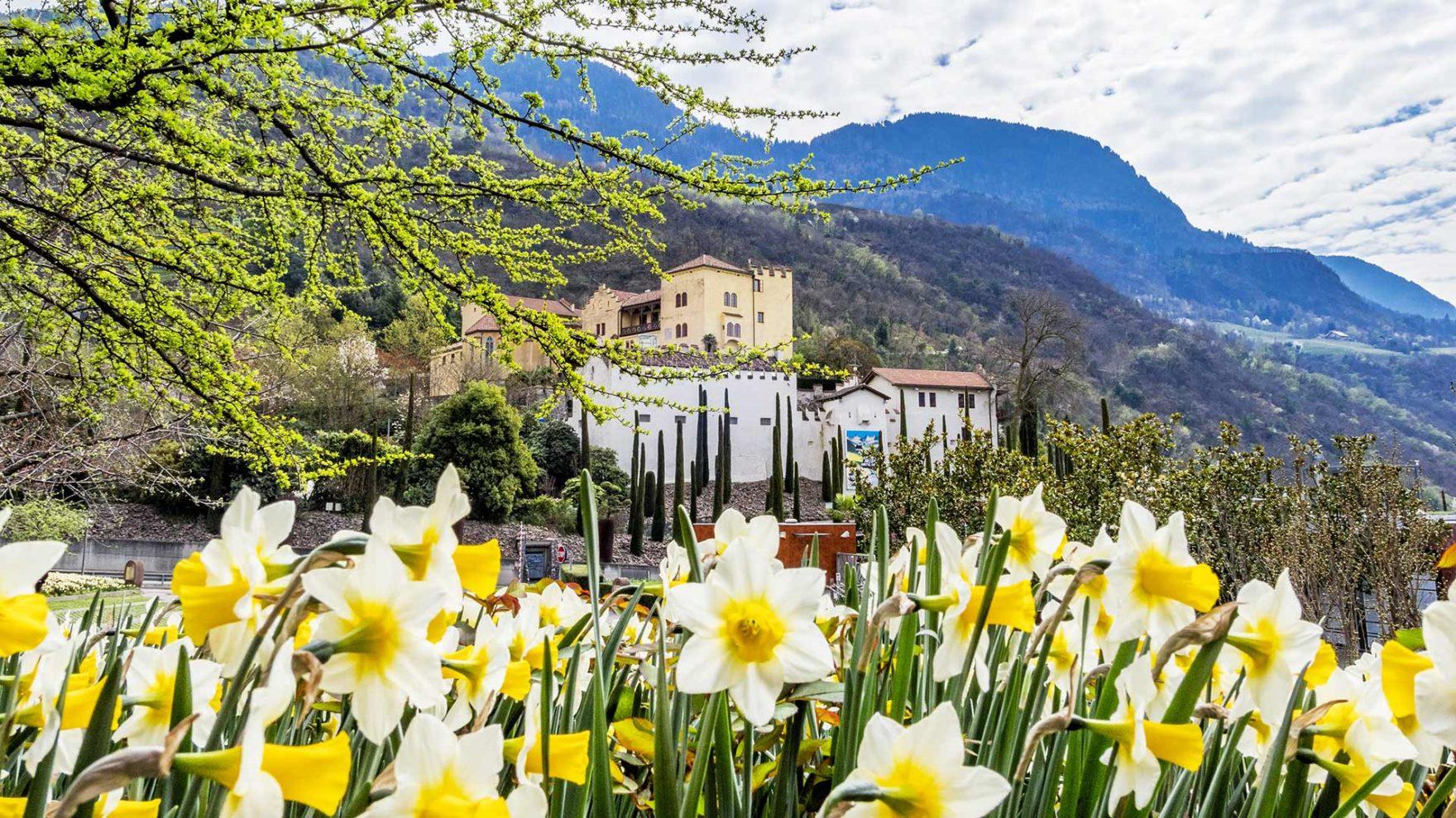 Die Gärten von Schloss Trauttmansdorff in der Jahreszeit Frühling