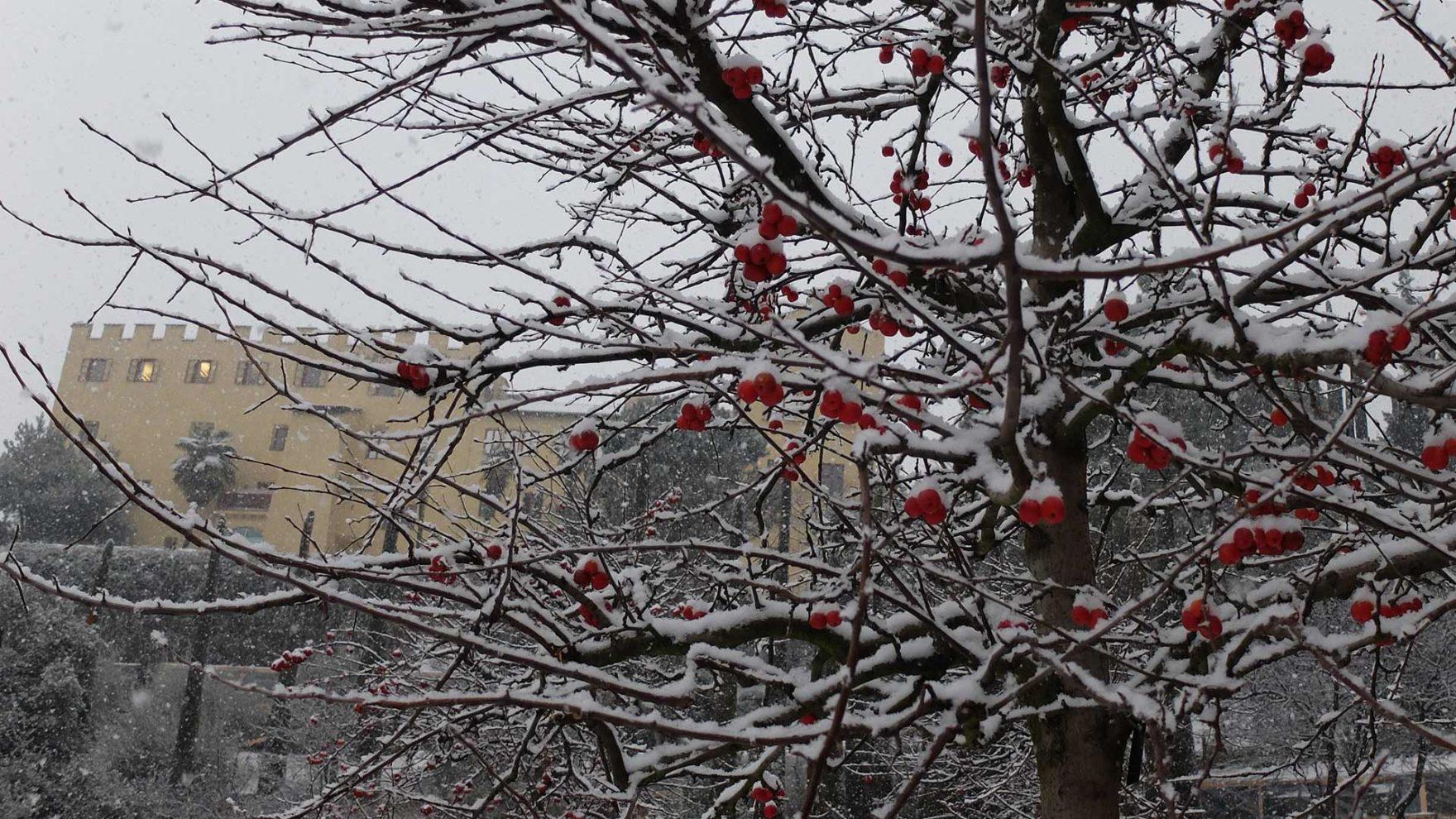 Die Gärten von Schloss Trauttmansdorff in der Jahreszeit Winter