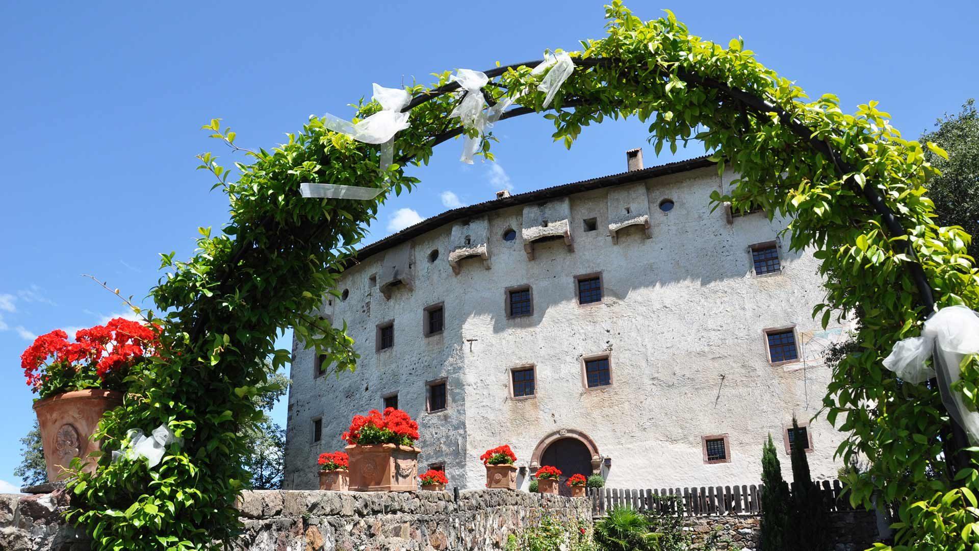 """Die Rebe """"Versoaln"""" bei Schloss Katzenzungen"""