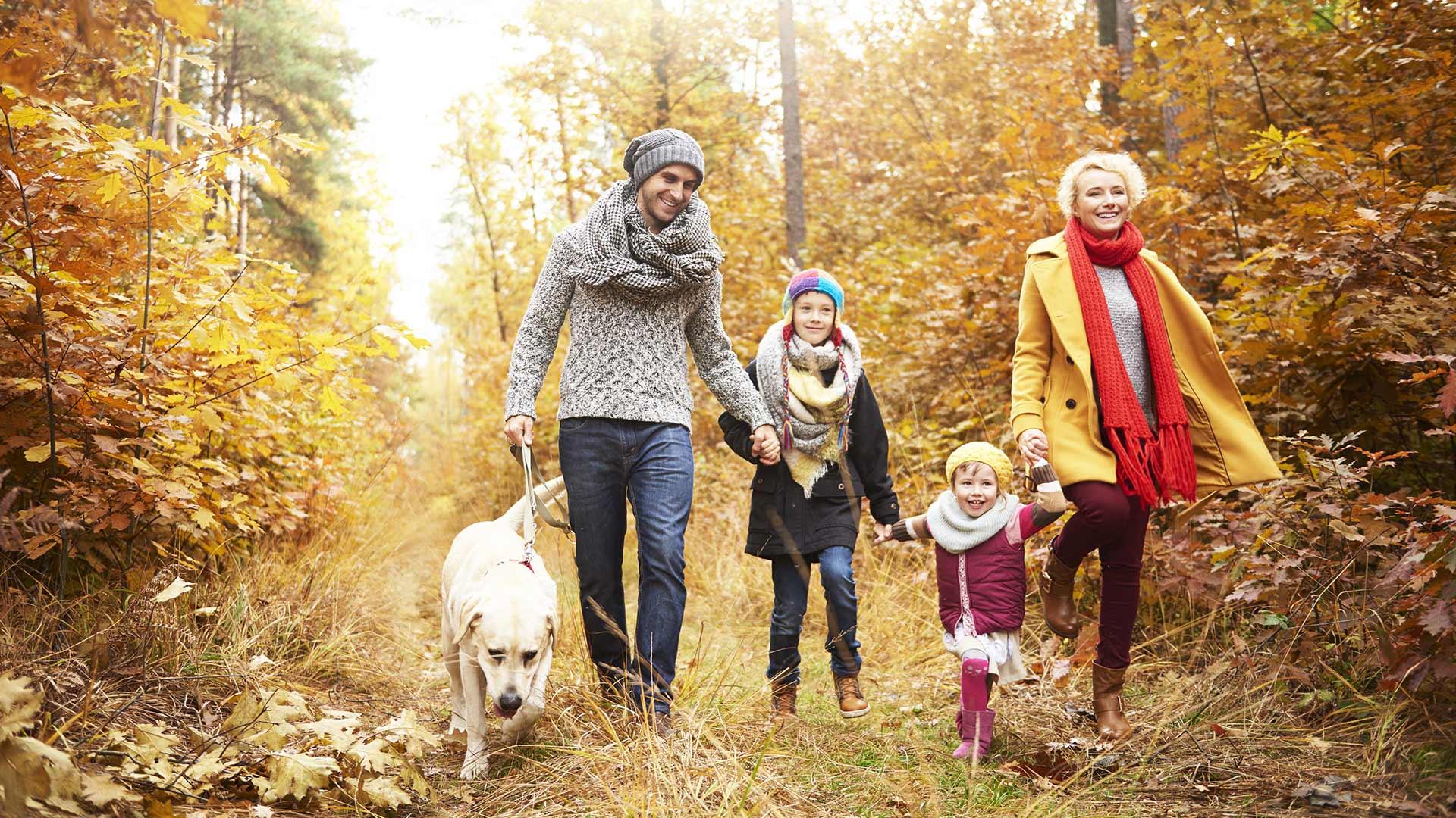 Wanderung im Herbst mit dem Hund