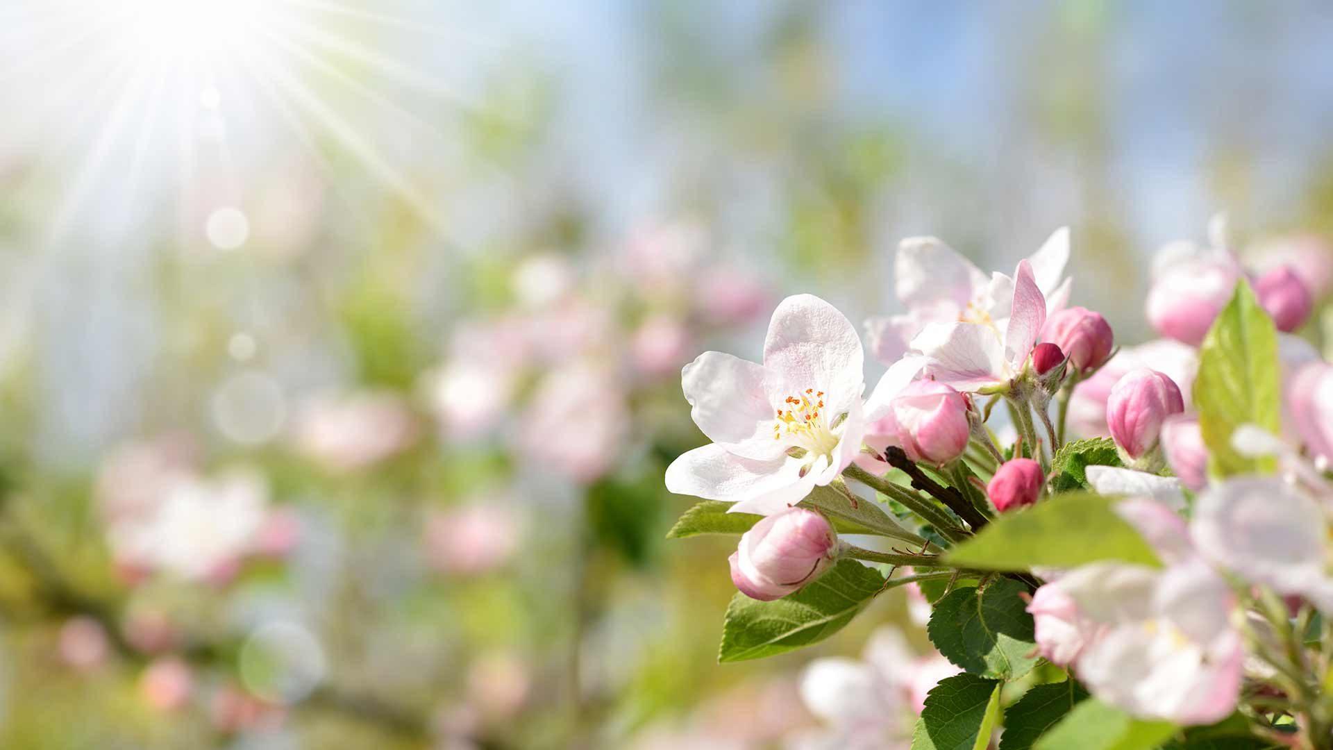 Blütenfesttage in Südtirol