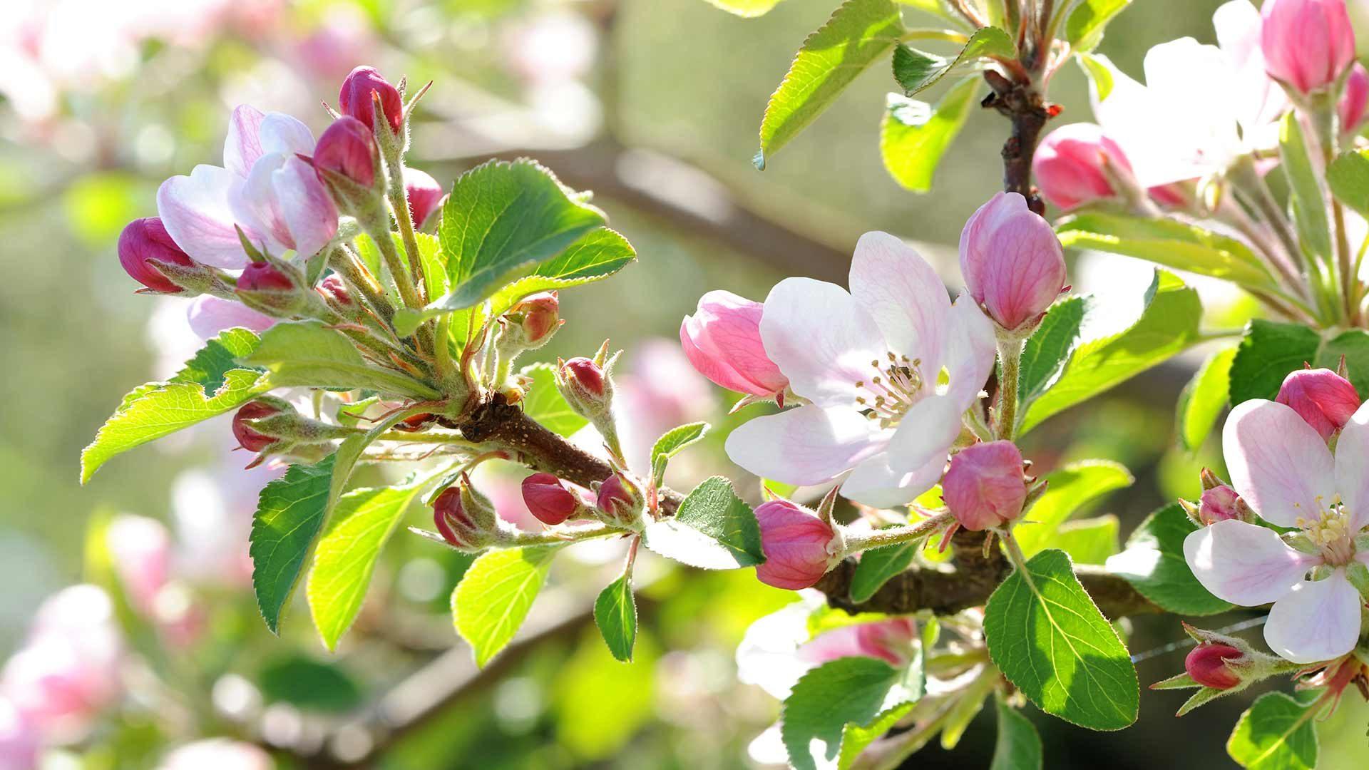 Blütenfesttage