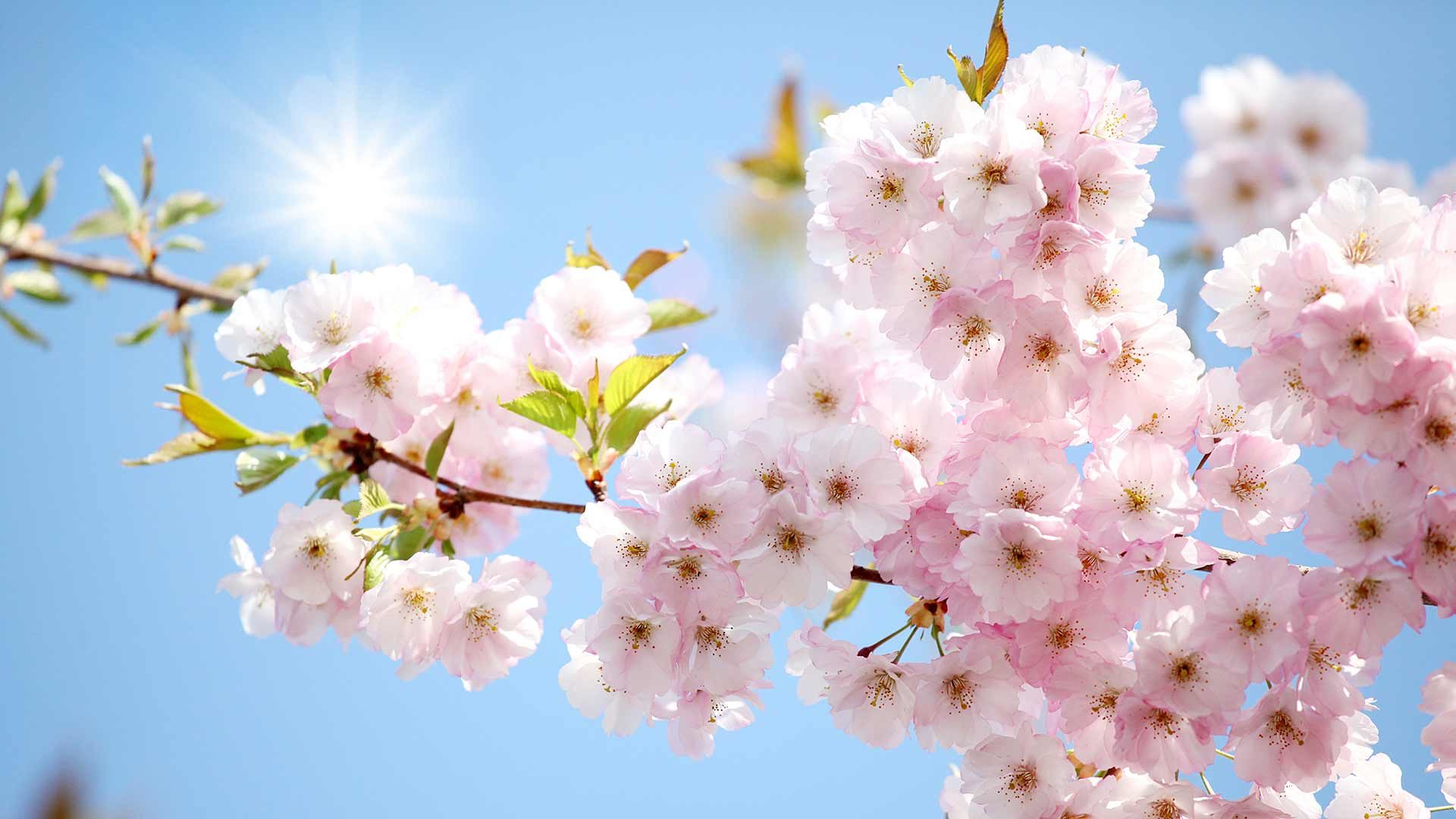Blütenfesttage in Lana