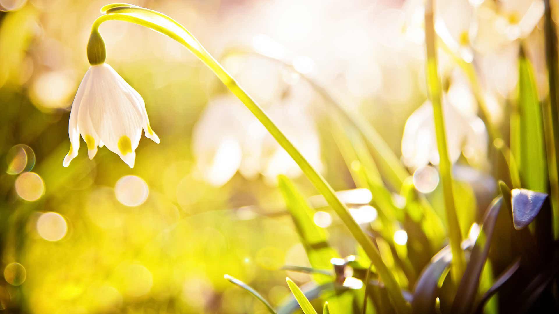 Frühlingsfest Naturns
