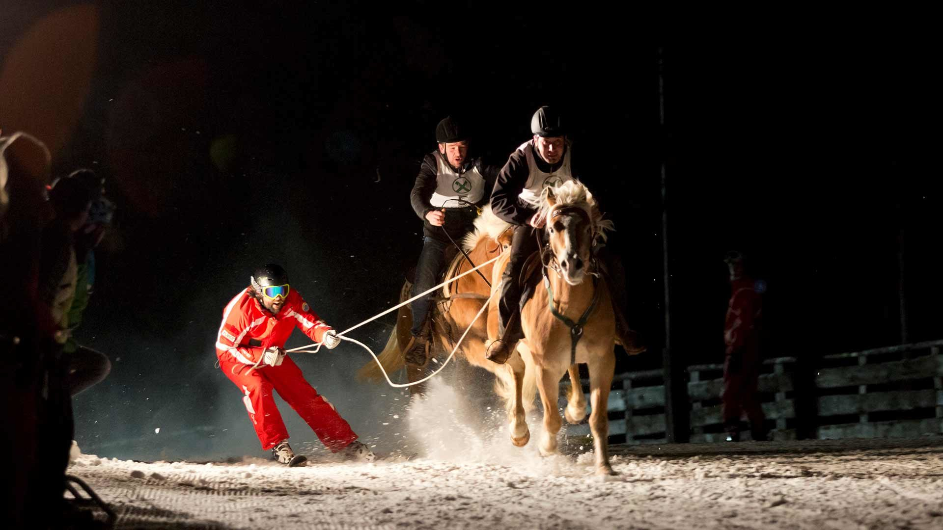 Nacht-Skikjöring mit Haflinger Pferden