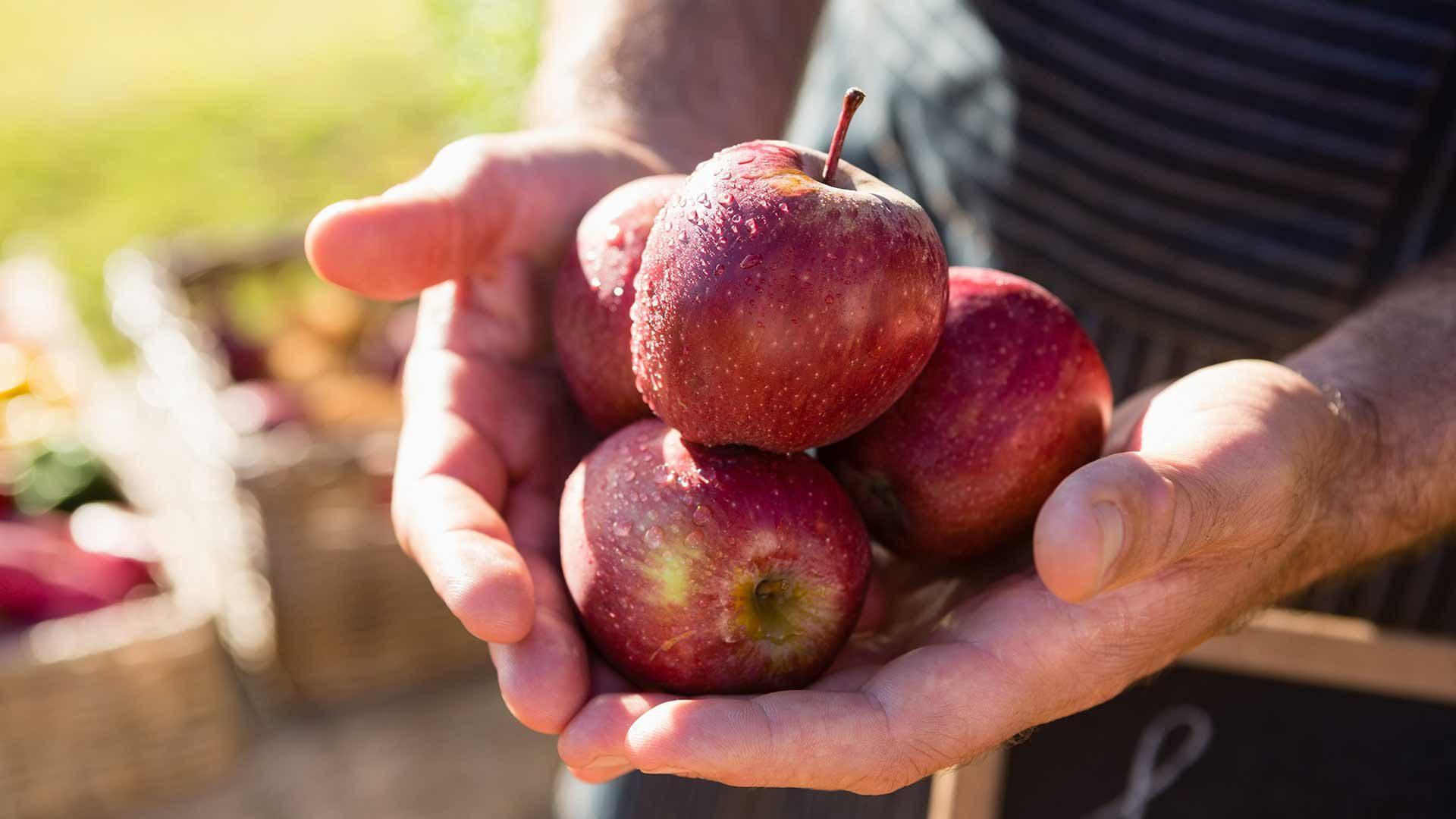 Partschinser Apfelführungen