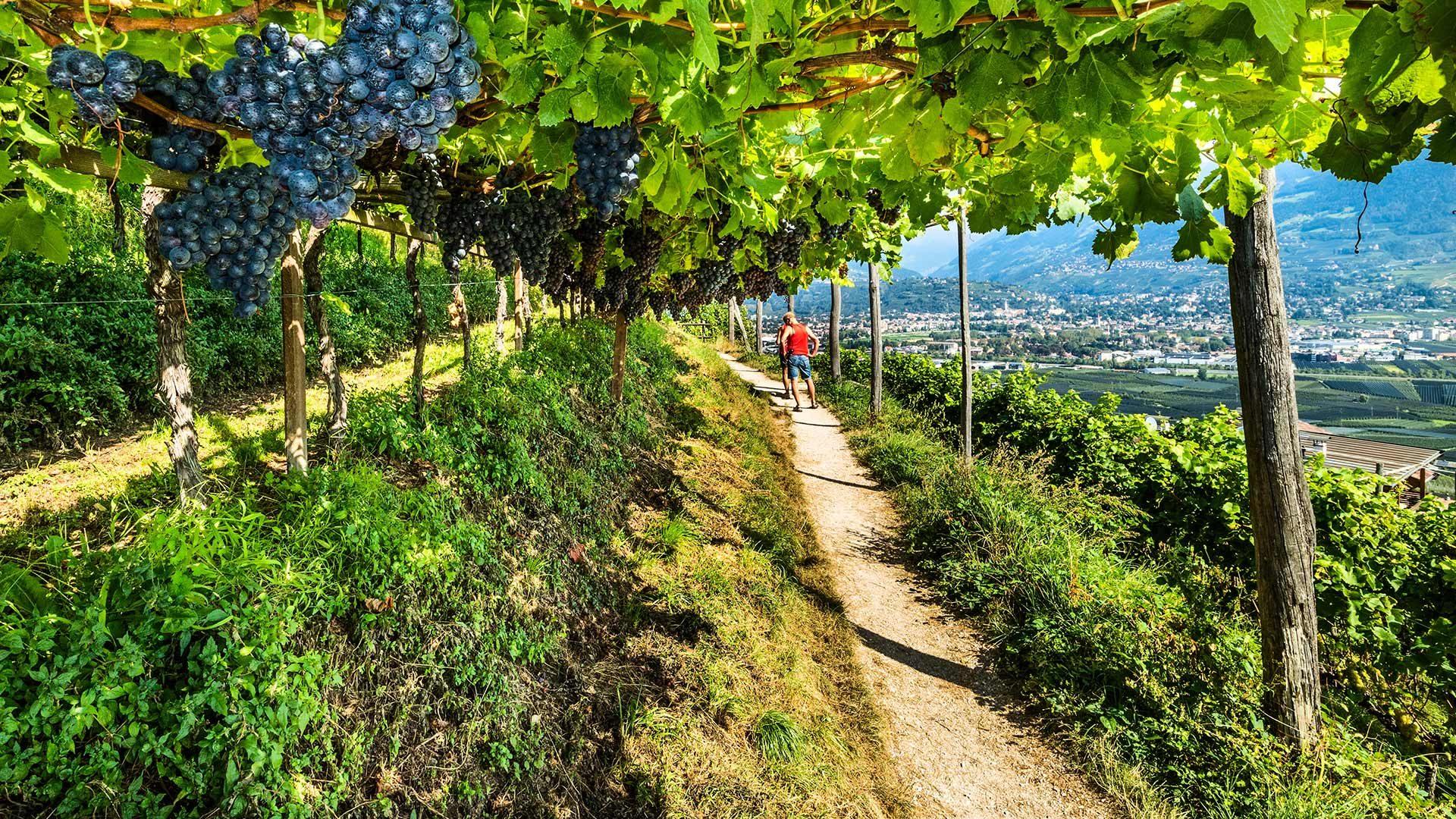 Marlinger Waalweg in Südtirol